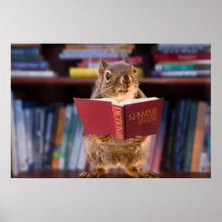 Ardilla elegante que lee un diccionario impresiones