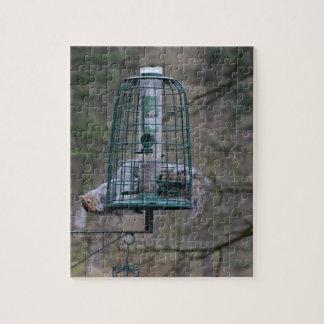 Ardilla en alimentador del pájaro puzzles con fotos
