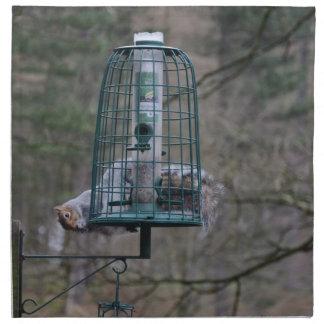 Ardilla en alimentador del pájaro servilleta imprimida