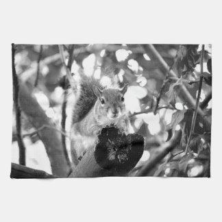 ardilla en animal lindo del bw del registro toallas de cocina