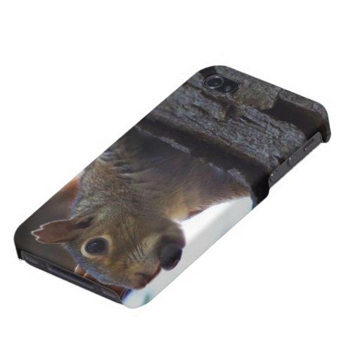 Ardilla en árbol con la nuez en la boca, primer iPhone 4 protectores