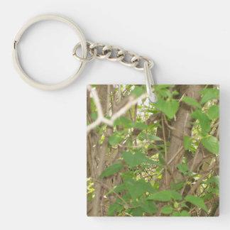 Ardilla en árbol llaveros
