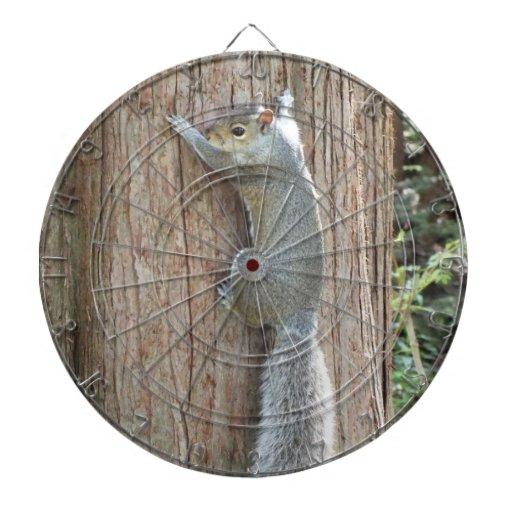 Ardilla en Dartboard del árbol