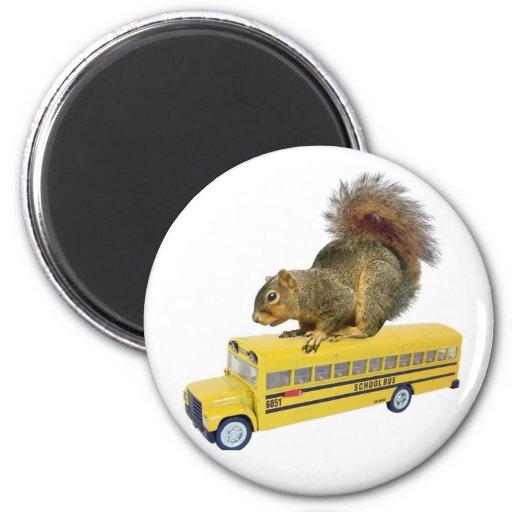 Ardilla en el autobús escolar imanes de nevera