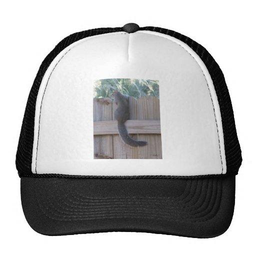 Ardilla en el gorra de la cerca
