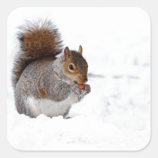 Ardilla en el invierno calcomania cuadradas