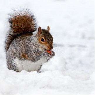 Ardilla en el invierno fotoescultura vertical
