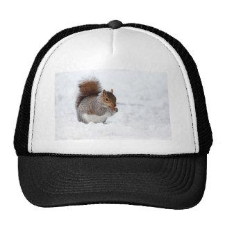 Ardilla en el invierno gorras