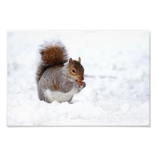 Ardilla en el invierno arte fotografico