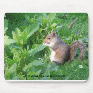 Ardilla en el parque de San Jaime, Londres Inglate Mouse Pads
