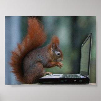 Ardilla en el poster del ordenador portátil