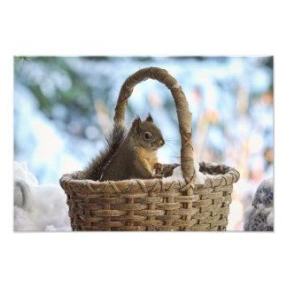 Ardilla en la cesta Nevado en foto del invierno