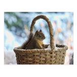 Ardilla en la cesta Nevado en foto del invierno Tarjeta Postal