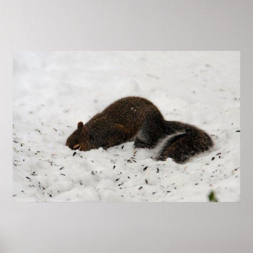 Ardilla en la impresión de la nieve impresiones