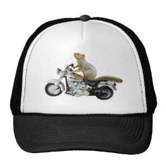 Ardilla en la motocicleta gorra