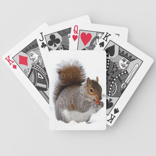 Ardilla en la nieve barajas de cartas