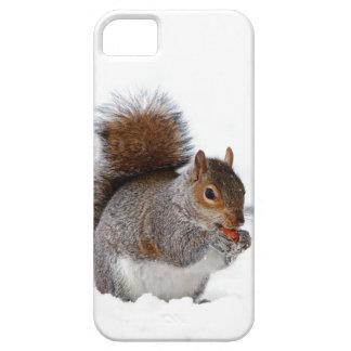 Ardilla en la nieve iPhone 5 Case-Mate protectores