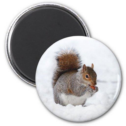 Ardilla en la nieve imán redondo 5 cm