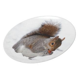 Ardilla en la nieve platos para fiestas