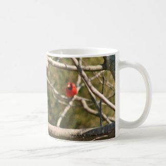 Ardilla en la taza de la taza de café de