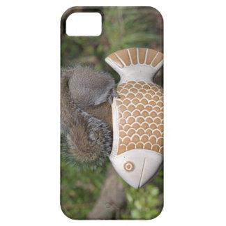 Ardilla en pescados iPhone 5 cárcasas