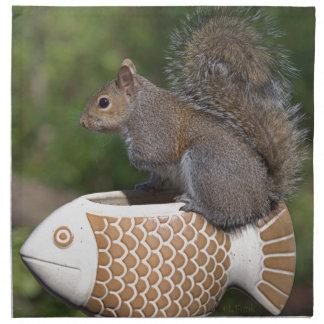 Ardilla en pescados servilleta