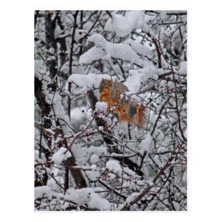 Ardilla en un árbol 6206 Nevado Postal