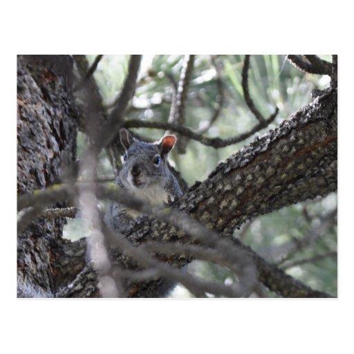 Ardilla en un árbol de pino postal