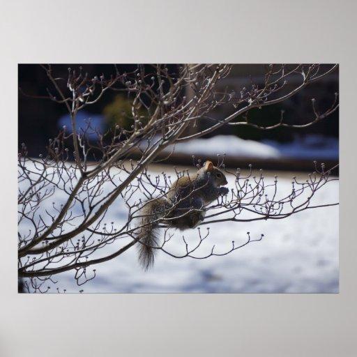 Ardilla en un árbol frío de la flor de cerezo póster