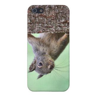 Ardilla en un árbol iPhone 5 funda
