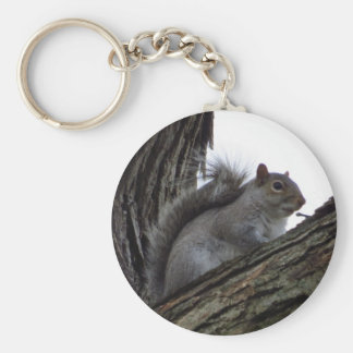 Ardilla en un árbol llaveros personalizados