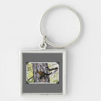 Ardilla en un árbol llaveros