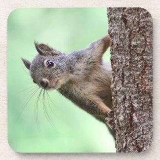 Ardilla en un árbol posavaso