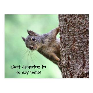 Ardilla en un árbol postal