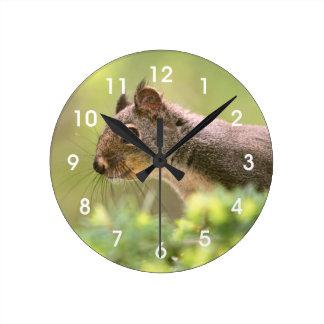 Ardilla en un árbol relojes