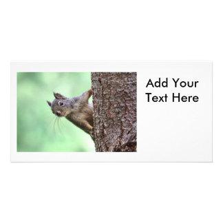 Ardilla en un árbol tarjeta con foto personalizada