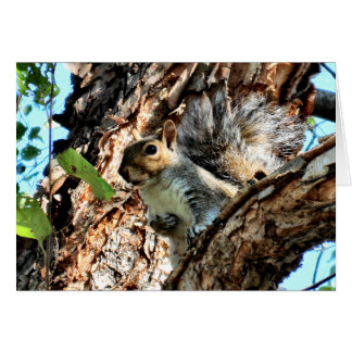 Ardilla en una foto del árbol tarjeta pequeña