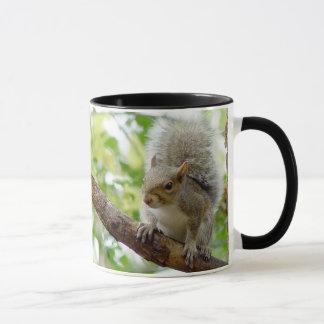 Ardilla en una taza del animal de la rama