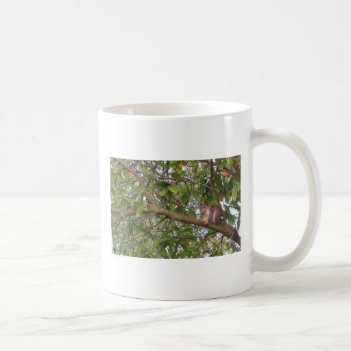 Ardilla en una taza del árbol