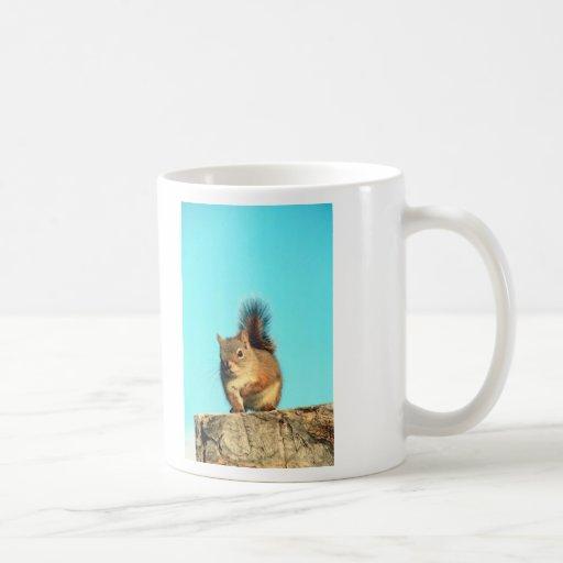Ardilla encaramada taza de café