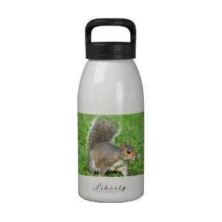 ardilla gris botellas de beber