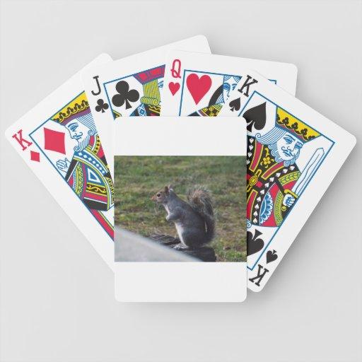Ardilla gris baraja cartas de poker