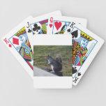 Ardilla gris baraja de cartas
