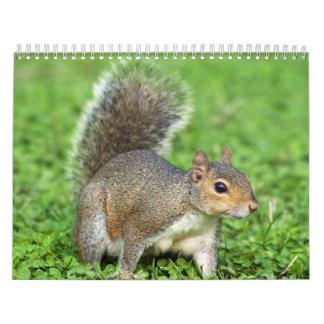 ardilla gris calendario