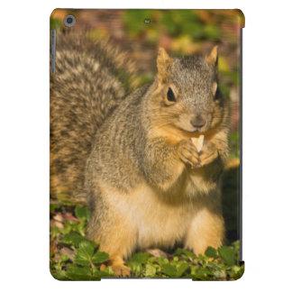 Ardilla gris, comiendo, cacahuete, Crystal Springs Funda Para iPad Air