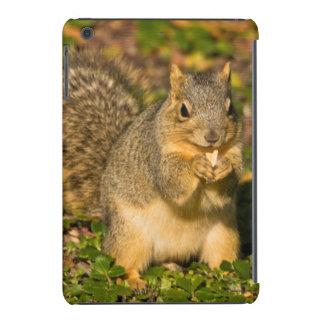 Ardilla gris, comiendo, cacahuete, Crystal Springs Fundas De iPad Mini
