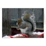 Ardilla gris en invierno felicitaciones