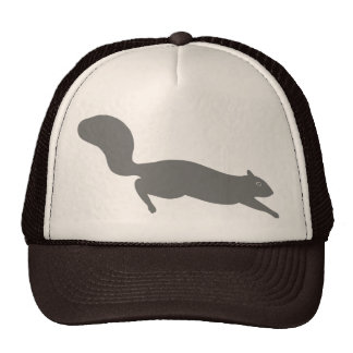 Ardilla gris gorra