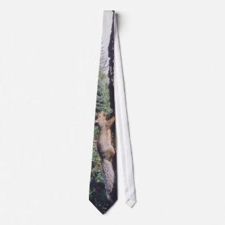 Ardilla gris - lazo corbata