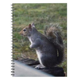 Ardilla gris cuaderno